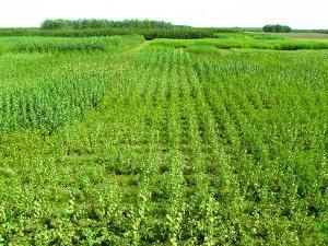 biomass fields